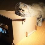 從CatFi看為何需要硬體加速器