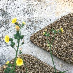 【加點製造】製造環保材質再進化—大麻籽殻