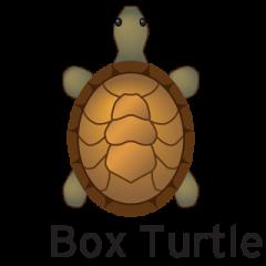 Box_Turtle.320
