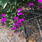 【採果辨識】建立自己的YOLO影像辨識模型 — 以柑橘為例