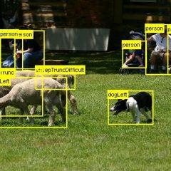 sheep_07