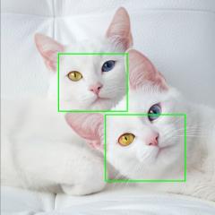 【影像辨識】訓練貓臉偵測器