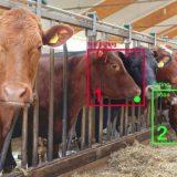 AI影像辨識應用多,動植物也能做辨識!