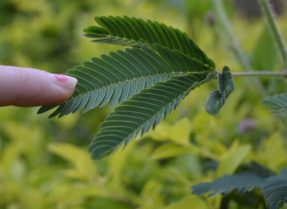 【科學新知】你知道植物也有記憶力、能學習?